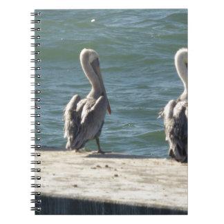 3 Pelicans Notebook