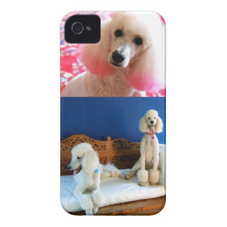 3 Poodles iPhone Case