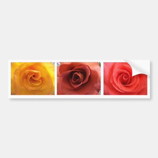 3 Roses Bumper Stickers