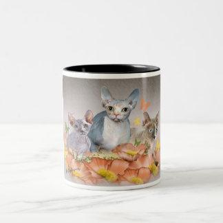 3 sphynx kittens Mug