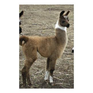 3 stooges, Llama style Customised Stationery