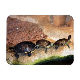 3 Turtle Friends Magnets