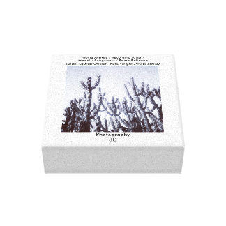 3D Cacti in Black and White Canvas Prints