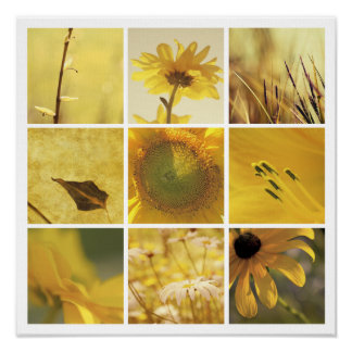 3x3 yellow nature photography Print