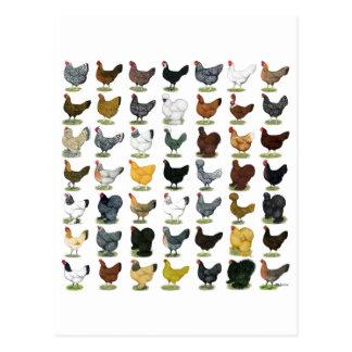 49 Chicken Hens Postcard