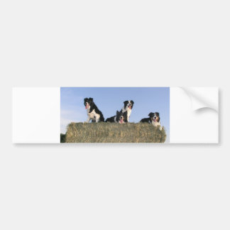 4 border collies bumper sticker