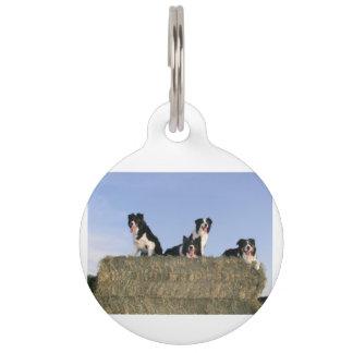 4 border collies pet name tag