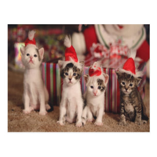 4 Kittens Christmas Card