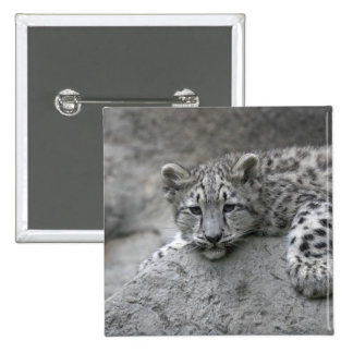 4 month old Snow leopard cub draped over a rock 15 Cm Square Badge