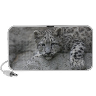 4 month old Snow leopard cub draped over a rock PC Speakers