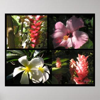 4 Tropical Flowers 4 Enchantment Poster Prints