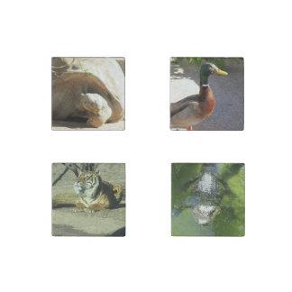 4 zoo animal magnets