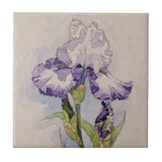 5327 Purple and White Iris Tile