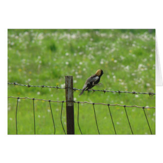 5 6 2009 044, Bobolink on One Foot Card