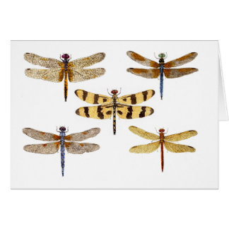 5 Dragonflies Card