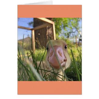 5x7 wink greeting card