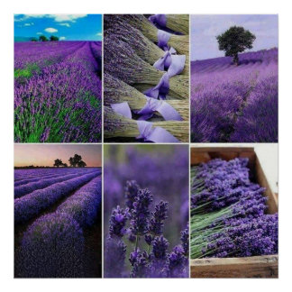 60.96x60.96cm, Lavender poster (chechmate)