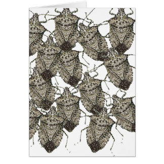 6-07-14 stink bugs rev.png card
