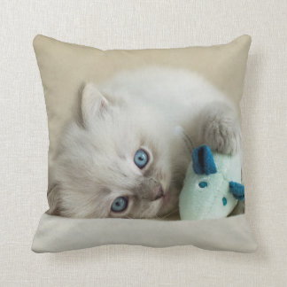 6 week old Ragdoll kitten Cushion