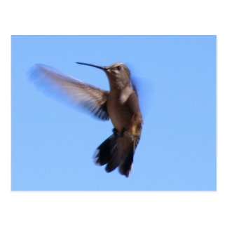 6J Hummingbird in Flight in a Blue Sky Postcard