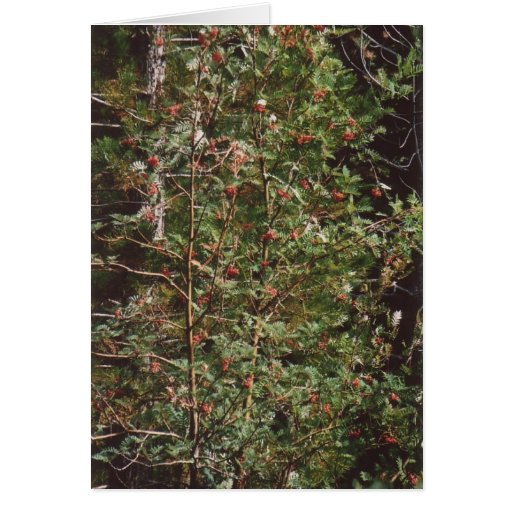 72. Bird Food - Berries on a Tree Cards