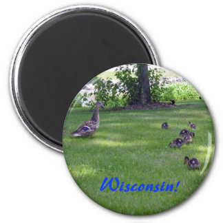 7 Little Ducklings Magnet