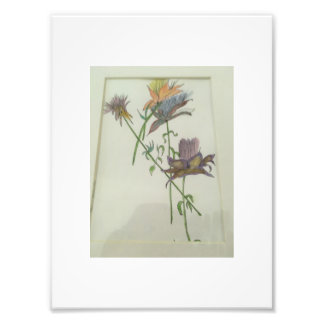 "7x5"" Kodak Professional Photo Paper (satin) flower"
