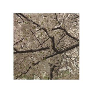 8X8 Cherry Blossoms Wood Print