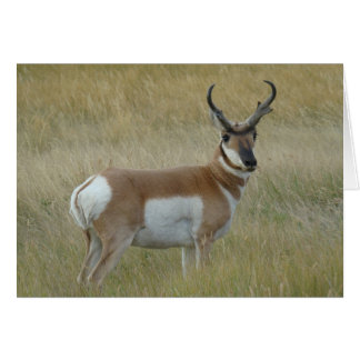 A0001 Pronghorn Antelope Buck Card