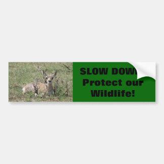 A0007 Baby Pronghorn Antelope Bumper Sticker