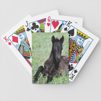 A baby horse in the meadow bicycle playing cards