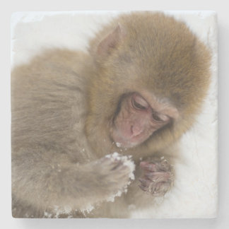 A baby Japanese Macaque (or snow monkey) Stone Coaster