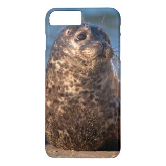 A baby seal coming ashore in Children's Pool iPhone 7 Plus Case
