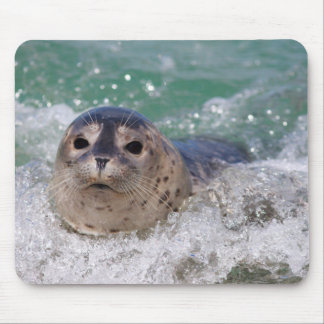 A baby seal surfing mouse pad