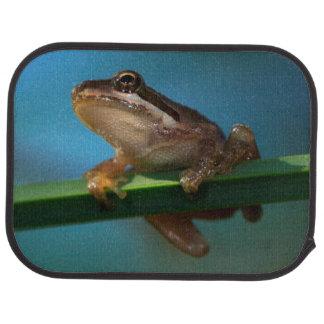 A Baby Tree Frog Car Mat