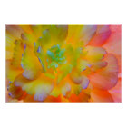 A back-lit, glowing begonia blossom poster
