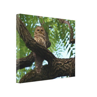 A Barred Owl on a Branch in the Woods Canvas Print