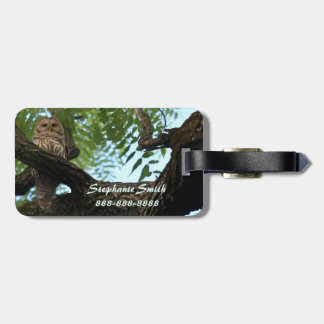 A Barred Owl on a Branch in the Woods Luggage Tag