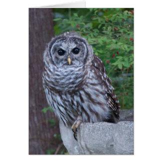 A Barred Owl Sits on a Birdbath Greeting Card