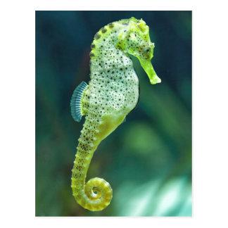 A Beautiful Knysna Seahorse Postcard