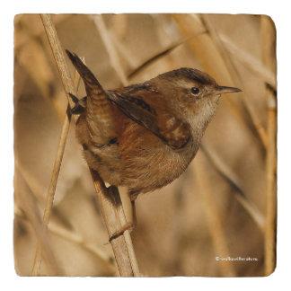 A Beautiful Marsh Wren in--Where Else?--the Marsh Trivet
