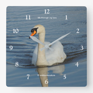 A Beautiful Mute Swan Approaches Square Wall Clock
