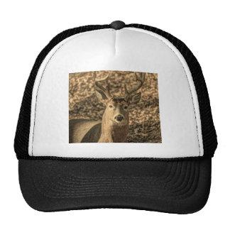 A beautiful rustic whitetail deer cap