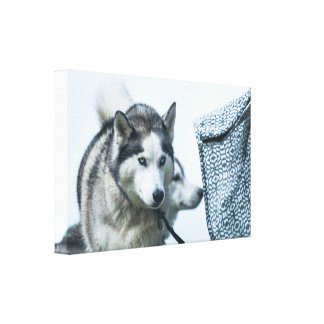 A beautiful siberian husky dog with a strict look canvas print