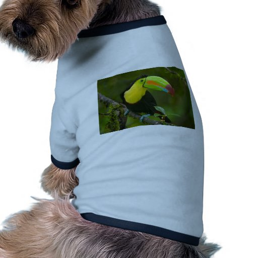 A beautiful toucan bird perched on a branch. pet tee