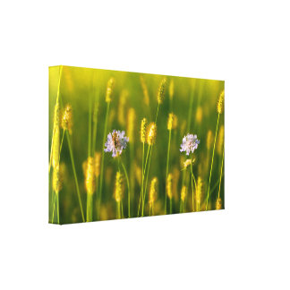 A bee on the Spring wild flowers Canvas Print