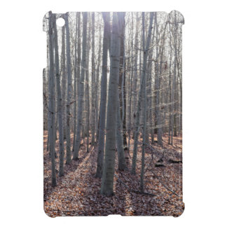 A beech forest in fall. iPad mini covers