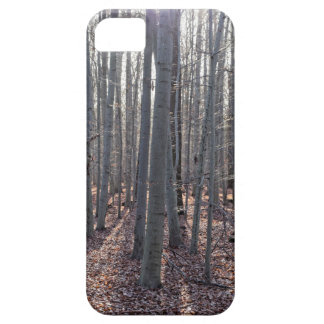 A beech forest in fall. iPhone 5 cases
