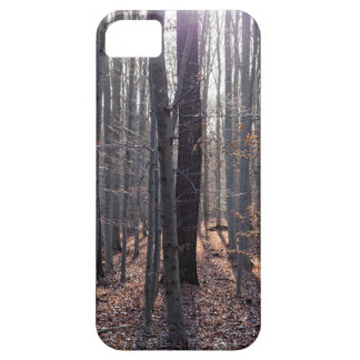 A beech forest in fall. iPhone 5 covers