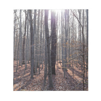 A beech forest in fall. notepad